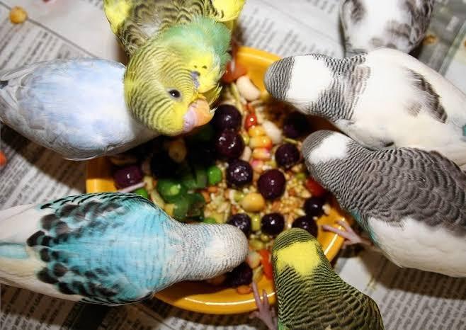 Kuşlarda Beslenme