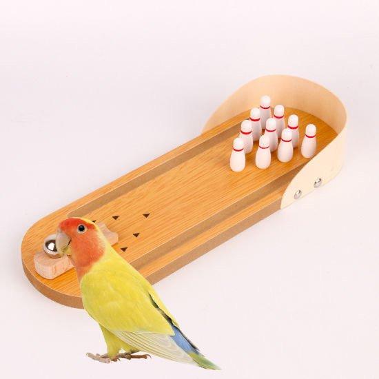 Kuş Eğitiminden Önce Bilmeniz Gerekenler