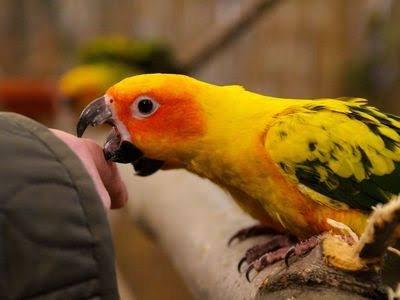 Kuş Isırmasında İlk Yardım