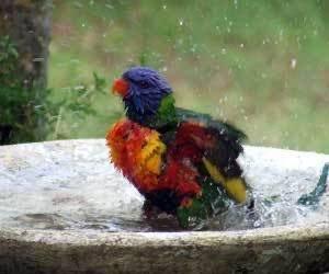 Kuş veya Papağanınızı Temizleme