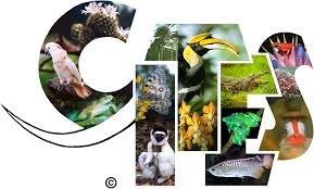 CITES Belgesi Nedir ve Neden Önemlidir?